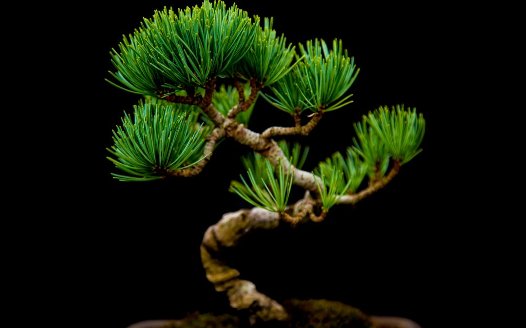 Bonsai-Arbeitskreis –27. April 2019
