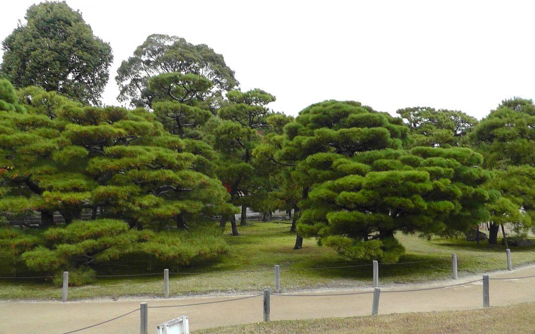Waldpflanzung08. Februar 2020